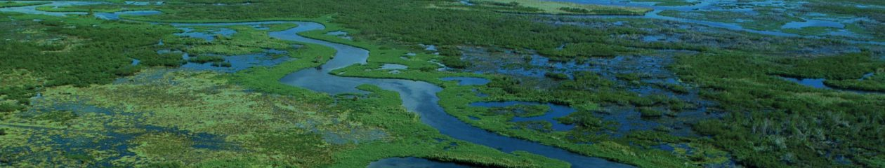 State of the River Report for the Lower St. Johns River Basin