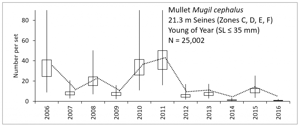 Line chart – number of young of the year striped mullet caught within the lower basin of the St. Johns River from 2006-2016.