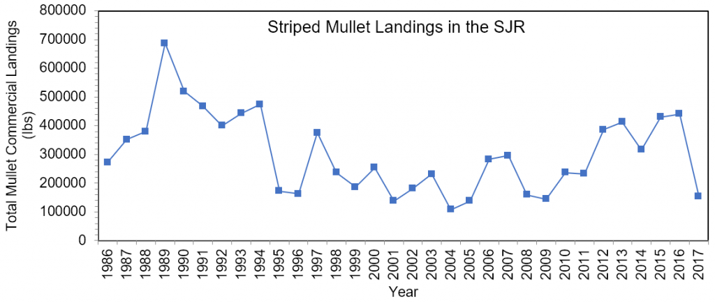 Figure 3.11 Commercial landings (in lbs) of striped mullet within the lower basin of the St. Johns River from 1986 to 2017 (FWRI 2019a).