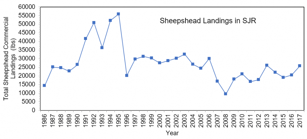 Figure 3.15 Commercial landings (in lbs) of sheepshead within the lower basin of the St. Johns River from 1986 to 2017 (FWRI 2019a).