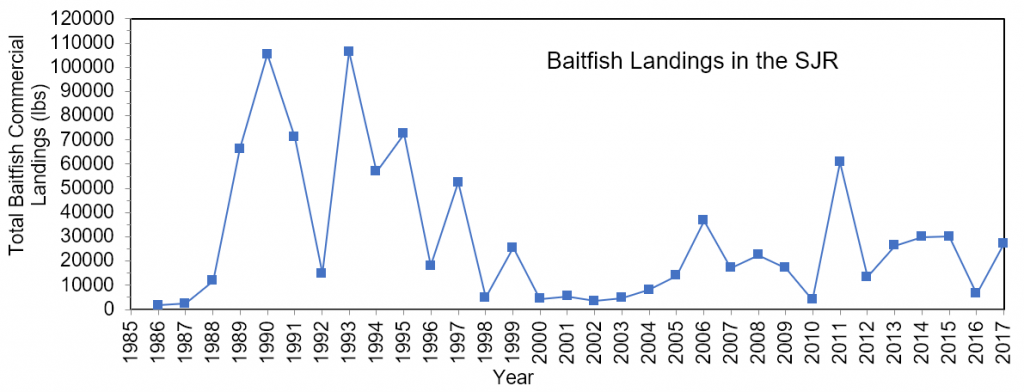 Figure 3.19 Commercial landings (in lbs) of baitfish within the lower basin of the St. Johns River from 1986 to 2017 (@@@@FWRI 2019a).