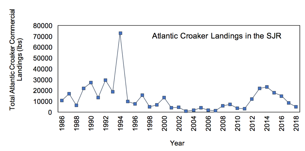 Figure 3.17 Commercial landings (in lbs) of Atlantic croaker within the lower basin of the St. Johns River from 1986 to 2018 (FWRI 2020a).
