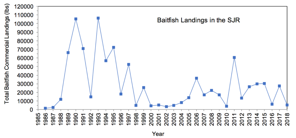 Figure 3.19 Commercial landings (in lbs) of baitfish within the lower basin of the St. Johns River from 1986 to 2018 (FWRI 2020a).