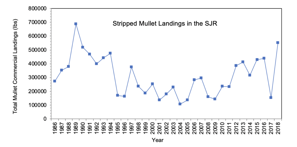 Figure 3.11 Commercial landings (in lbs) of striped mullet within the lower basin of the St. Johns River from 1986 to 2018 (FWRI 2020a).