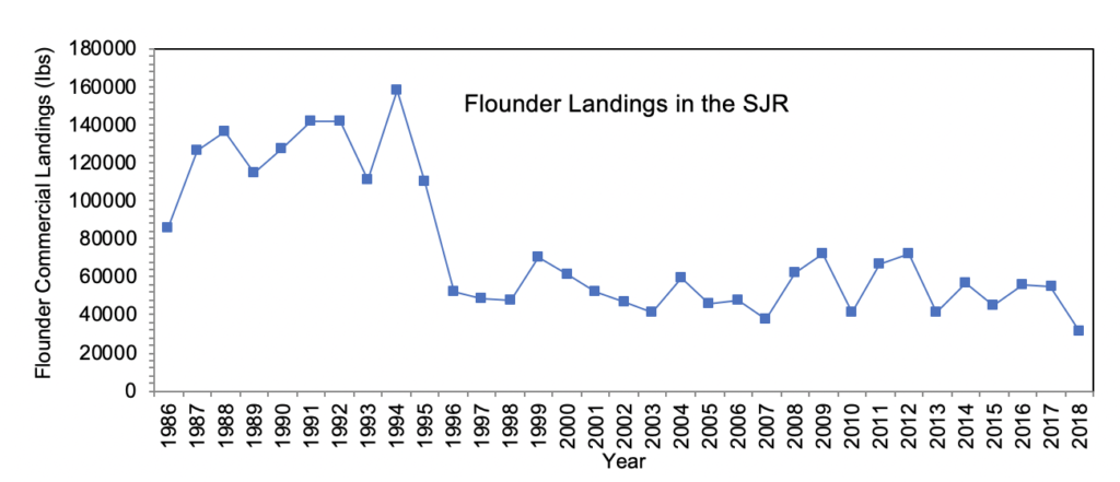 Figure 3.13 Commercial landings (in lbs) of southern flounder within the Lower Basin of the St. Johns River from 1986-2018 (FWRI 2020a).